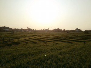 Rice terraces on the morning run